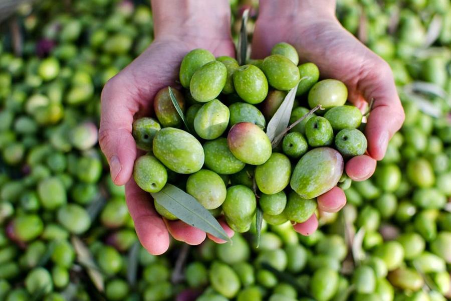 Ελιά & Αγρότης - AgroticMall.gr